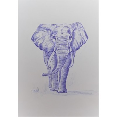 2020-07-éléphant-21-x-29.7-dessin-au-bic-de-chenel